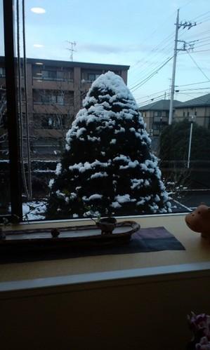 tree.jpgのサムネイル画像